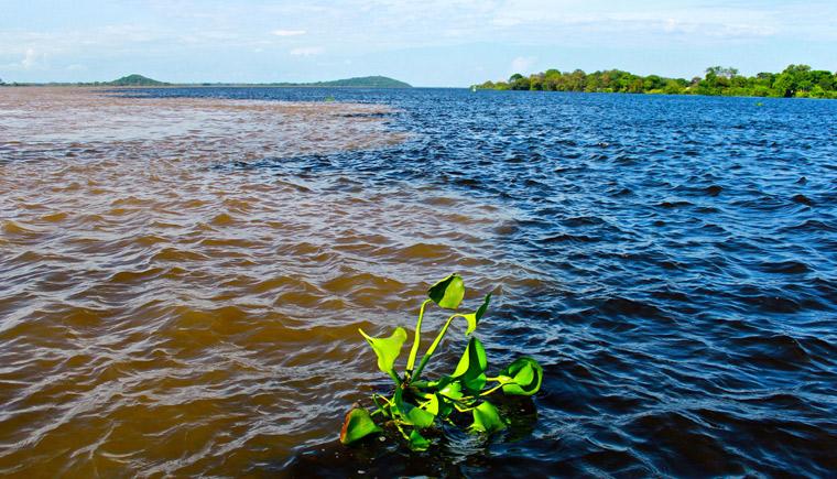 Unión de los ríos Orinoco y Caroní